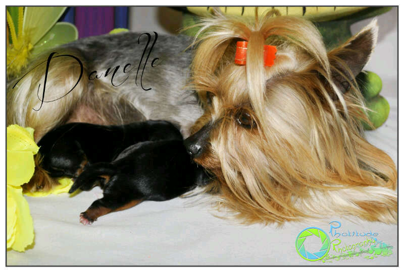 danelle's-previous-puppies